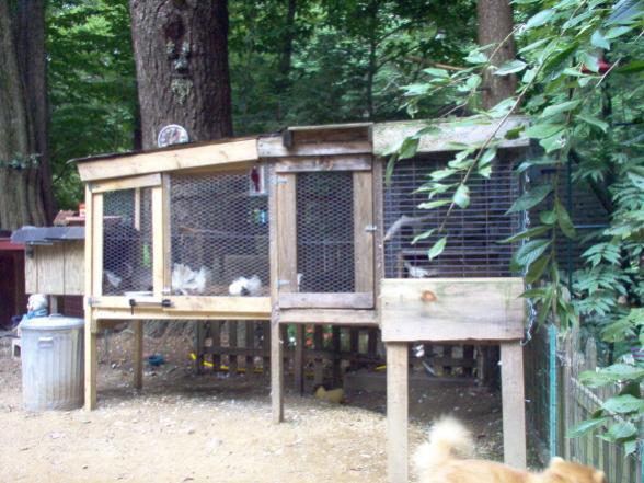 Loft or Aviary Help - Pigeon-Talk