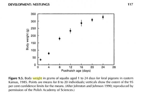 Weight Chart? - Pigeon-Talk